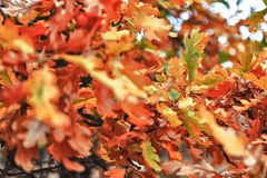 Autumn Colors Fotografía de archivo