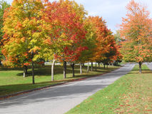 Autumn Colors. Colorful maple trees line a college boulevard stock image