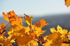 9 autumn colors Στοκ εικόνες με δικαίωμα ελεύθερης χρήσης