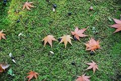 9 autumn colors Στοκ φωτογραφίες με δικαίωμα ελεύθερης χρήσης