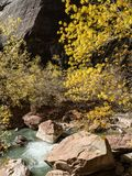 Autumn colors adorn the Virgin River in Zion National Park Stock Photo