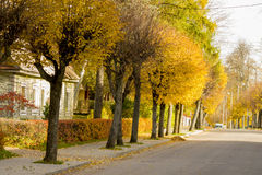 Autumn colors alley in Lithuania Stock Photography