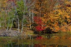 Autumn Colors Along a costa do lago mountain das baías imagem de stock