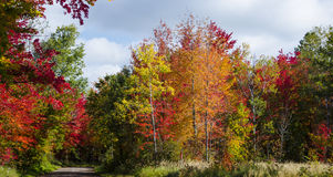 Autumn colors along a dirt road royalty free stock photo