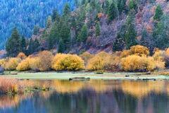Autumn Colors along Klamath Lake stock images