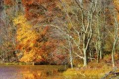 Autumn Colors Along la orilla del lago mountain de las bahías fotografía de archivo