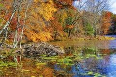 Autumn Colors Along le rivage du lac mountain de baies photo libre de droits