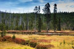 Autumn Colors Along Lewis River nel parco nazionale di Yellowstone Fotografia Stock