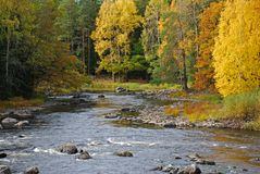 Autumn colors along river. A view of the beautiful colors of autumn leaves along a scenic river in Sweden Stock Image