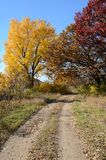 Autumn Colors Along a Rural Road Royalty Free Stock Photo