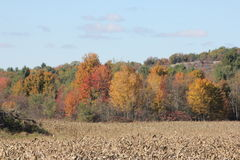 Autumn Colors Along Tree Line Stock Photography