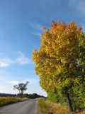 Colorful tree and a rural road in autumn nature. Amazing colored foliage on the way. Traveling by country landscape with alley under blue sky in sunny clear royalty free stock photos
