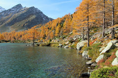 Autumn colors at Arpy lake Stock Images
