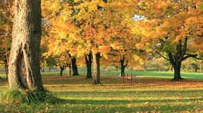Autumn Colors At Sunset. Royalty Free Stock Images