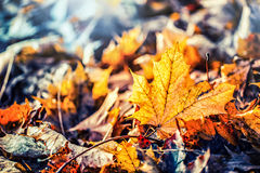 Autumn colors. Autumn leaves in autumn colors and lights royalty free stock photography