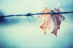 Autumn colors. Autumn leaves in autumn colors and lights. Frozen autumn leaves royalty free stock photo