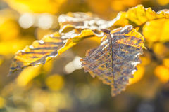 Autumn colors. Autumn leaves in autumn colours and lights.fall Royalty Free Stock Image