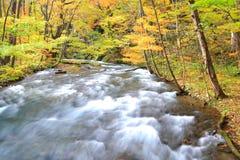 Autumn Colors av den Oirase strömmen Arkivbild