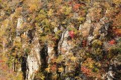 Autumn Colors av Naruko-klyftan i Japan Fotografering för Bildbyråer