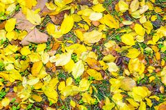 Autumn colors background Royalty Free Stock Image