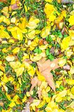 Autumn colors background vivid Stock Photos