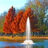 Autumn colors, Bald Cypress trees. Autumn colors on Bald Cypress trees at Towne Lake Park, McKinney, Texas royalty free stock photos