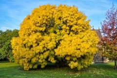Autumn colors in Ballarat. Australia Landscape : Autumn colors in Ballarat Stock Images