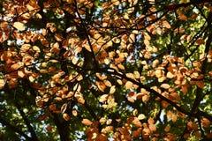 Autumn Colors. Beautiful autumn colors Stock Photos
