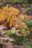 Autumn colors Royalty Free Stock Photos