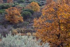 Autumn colors Stock Image