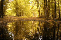 Autumn colors of a beautiful forest reflecting Stock Photos