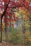 The autumn colors. Stock Photo