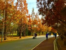 The Autumn colors in Beijing. Chaoyang Park Royalty Free Stock Images