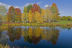 Autumn colors and blue sky Reflecting Stock Image