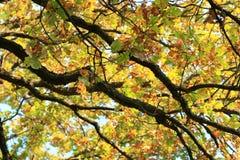 Autumn Colors Bomen in de herfst Geel gebladerte De schoonheid van de herfst royalty-vrije stock fotografie