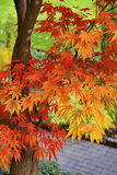 Autumn Colors. In the Butchart garden, Victoria, BC, Canada Royalty Free Stock Image