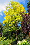 Autumn colors in Canada. Trees with autumn leaves in Canada Royalty Free Stock Photography