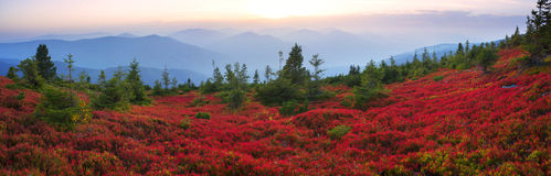 Autumn colors in the Carpathians Royalty Free Stock Photography