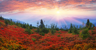Autumn colors in the Carpathians Stock Photography