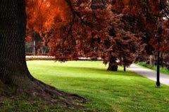Autumn colors city park Stock Images