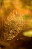 Autumn colors cobweb Stock Image