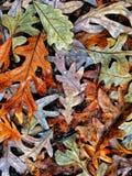 Autumn Colors Collection Royaltyfri Fotografi