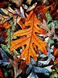 Autumn Colors Collection Royaltyfria Foton