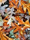 Autumn Colors Collection Arkivbilder