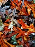 Autumn Colors Collection Arkivbild