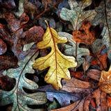 Autumn Colors Collection Fotografering för Bildbyråer