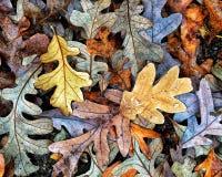 Autumn Colors Collection Arkivfoto