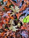 Autumn Colors Collection Foto de archivo