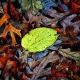 Autumn Colors Collection Arkivfoton