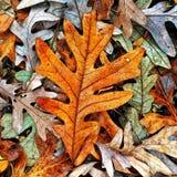Autumn Colors Collection Royaltyfri Foto